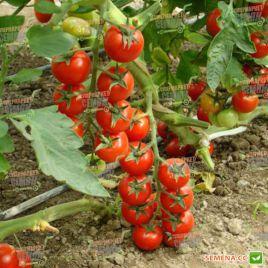 Котти F1 семена томата индет. черри раннего окр. 15-20 гр. (May Seeds) НЕТ СЕМЯН
