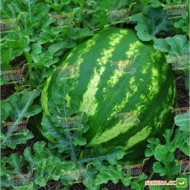 Кримсон Свит семена арбуза среднего 80-85 дн. окр. (May Seeds) СНЯТО С ПРОИЗВОДСТВА
