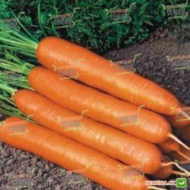 Нантес семена моркови Нантес среднеранней 100-110 дн. (May Seeds) НЕТ СЕМЯН