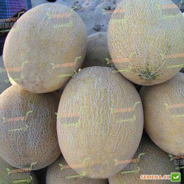 Ананас семена дыни (Rem seeds)