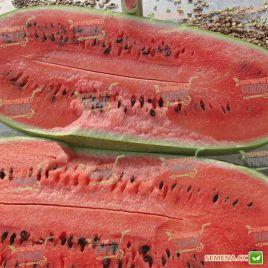 Чарльстон грей семена арбуза средн. 75-80 дн. 12-18 кг (Rem seeds)