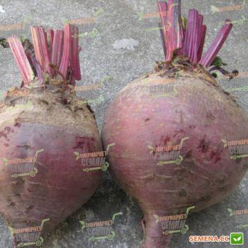 Детройт семена свеклы столовой (Rem seeds)