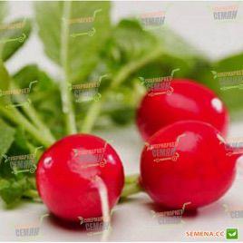 Сакса семена редиса 23-25 дн. (Rem seeds)
