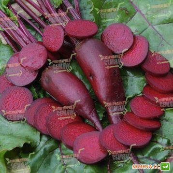 Цилиндра семена свеклы столовой (Rem seeds)