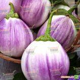 Бьянка Сфумата ди Роса семена баклажана (SAIS)