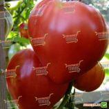 Бычье Сердце семена томата индет. (SAIS)