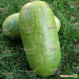 Чарльстон Грей семена арбуза среднего 85-90 дн. 11-13 кг удл. (SAIS)