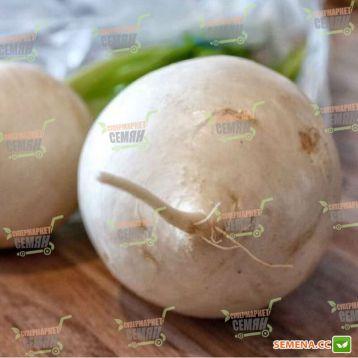 Круглая белая семена редьки средней 80-100 дн. (SAIS) НЕТ ТОВАРА