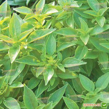 Лимонний семена базилика зеленого (SAIS)