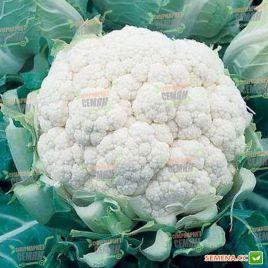 Миньон F1 семена капусты цветной средней (Tezier) НЕТ СЕМЯН