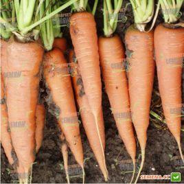 Скарла семена моркови Флакке среднеспелой 145 дн. (Tezier) НЕТ СЕМЯН