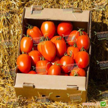 Колеос F1 (132-111 F1) семена томата индет. среднего 105-115 дн. слив. 200-220 гр. красный (Yuksel)