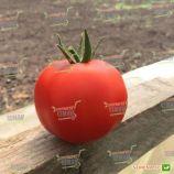 Анталия F1 семена томата индет. раннего 95-100 дн. окр.-прип. 170-190г красный (Yuksel)