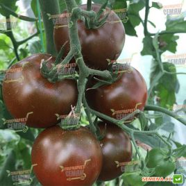 Биг Сашер F1 (132-283) семена томата индет. раннего окр. 150-170 гр. черн. (Yuksel)