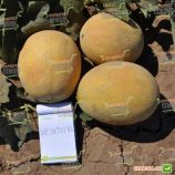 Радмила F1 (Медетли)семена дыни типа Ананас (Yuksel)