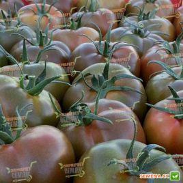 Сашер F1 семена томата индет. ультрараннего окр.-прип. 150-170г черн. (Yuksel)