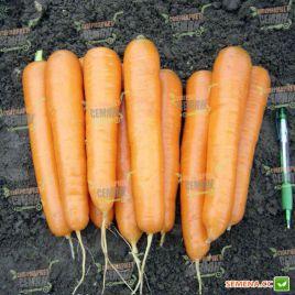 Аттилио F1 (VD) семена моркови Нантес поздней 115-120 дн. (Vilmorin)
