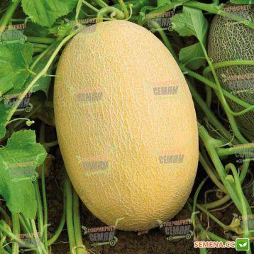 Бижур F1 семена дыни тип Ананас (Vilmorin)
