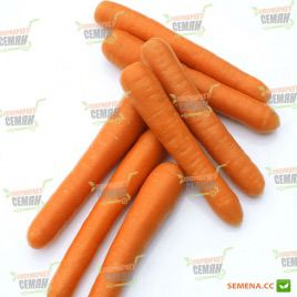 Болеро F1 семена моркови Нантес (VD) (Vilmorin)