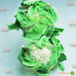 Борис F1 семена капусты цветной (Vilmorin)