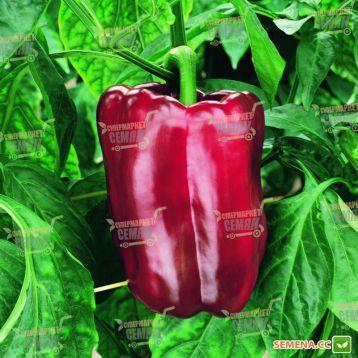 Дукато F1 семена перца сладкоготип Блочный среднего 70-75 дн. кубов. 250-280 гр. 16-18х8-9 см 10 мм зел./красн. (Vilmorin) НЕТ С