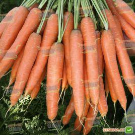 Престо F1 семена моркови Нантес ранней 80-85 дн. (Vilmorin)