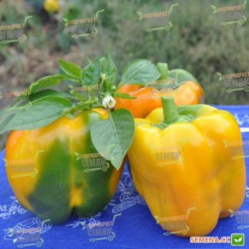 Серено F1 семена перца сладкого тип Блочный среднего 70-75 дн. кубов. 200 гр. 11-13х8-9 см 4 камер. 7-9 мм зел./желт. (Vilmorin)