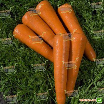 Силвано F1 семена моркови Нантес (Vilmorin)