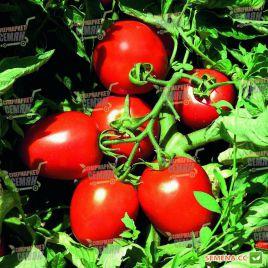 Сурия F1 семена томата дет. раннего 75-85 дн. слив. 100-120 гр. (Vilmorin)
