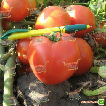 Трибека F1 семена томата дет. средний 70-75 дн. окр. 220-230 гр. красный (Vilmorin)