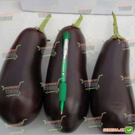 Вернал F1 семена баклажана (Vilmorin)