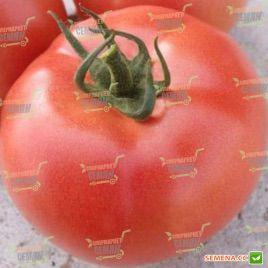 ВП 2 (VP 2 F1) семена томата индет. раннего 70 дн. окр. 240-270 гр. роз. (Vilmorin)
