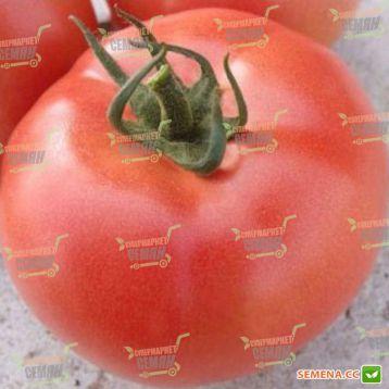 VP-2 F1 семена томата индет. розового (Vilmorin)