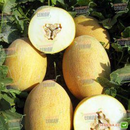 Анамакс F1 семена дыни тип Ананас (United Genetics)