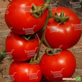 Эл Гордо F1 семена томата индет. раннего 75-80 дн. окр.-припл. 250-300 гр. (United Genetics)