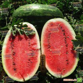 Эрли Саманта F1 семена арбуза тип Кримсон Свит (United Genetics)