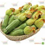 Карамболь F1 семена кабачка (United Genetics)