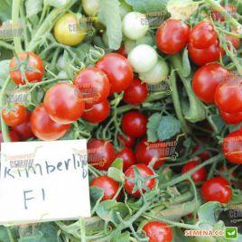 Кимберлино F1 семена томата дет. черри среднего 118дн. окр. 20-25 гр. (United Genetics)