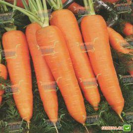 Курода Шантане семена моркови (United Genetics)