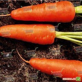 Шантане Ред Кор семена моркови среднепоздней 120-125 дн. (United Genetics)