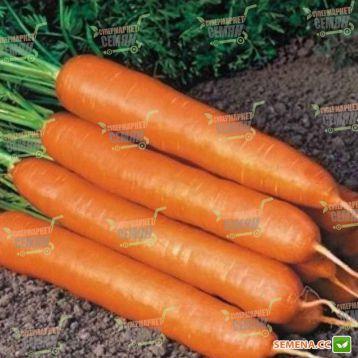 Скарлет семена моркови Нантес (United Genetics)