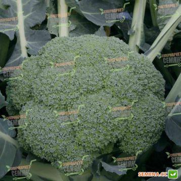 Квинта F1 семена капусты брокколи средней 80-85 дн. 0,8-1 кг (Taki Seeds)