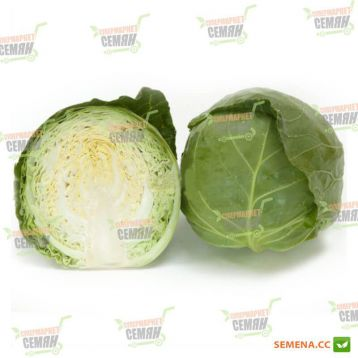 Ортус F1 семена капусты б/к ультраранней 52-55 дн. 1-1,5 кг окр. (Takii Seed)