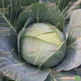 Отм Квин F1 семена капусты б/к среднеранней 75-80 дн. 2-4 кг окр-прип. (Takii Seeds)