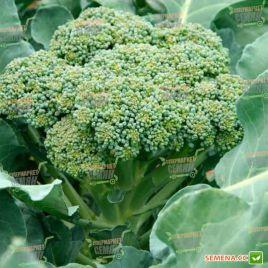 TBR 508 F1 (Громовой купол) семена капусты брокколи средней 80-85 дн 1-1,2 кг (Takii Seeds)