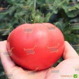 ТЕХ 2720 F1 семена томата индет. розового (Taki Seeds)