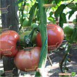 ТЕХ 2721 F1 семена томата индет. розового (Taki Seeds)