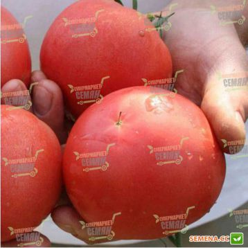 ТЕТМ 010 F1 семена томата индет. розового (Taki Seeds) (250 сем.)
