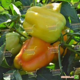 Фокус семена перца сладкого раннего (Solare Sementi)
