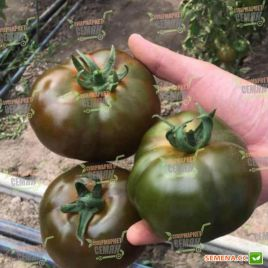 Блек Кинг F1 (ТС 03-0079 F1) семена томата индет. раннего 180-190 гр. черн. (Solare Sementi)